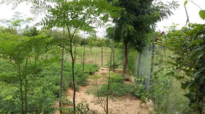 MURNA FOUNDATION FARMS