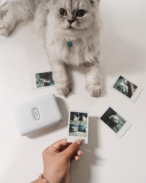 החתולה אוהבת את הקולאז שהודפס במיני לינק הלבן