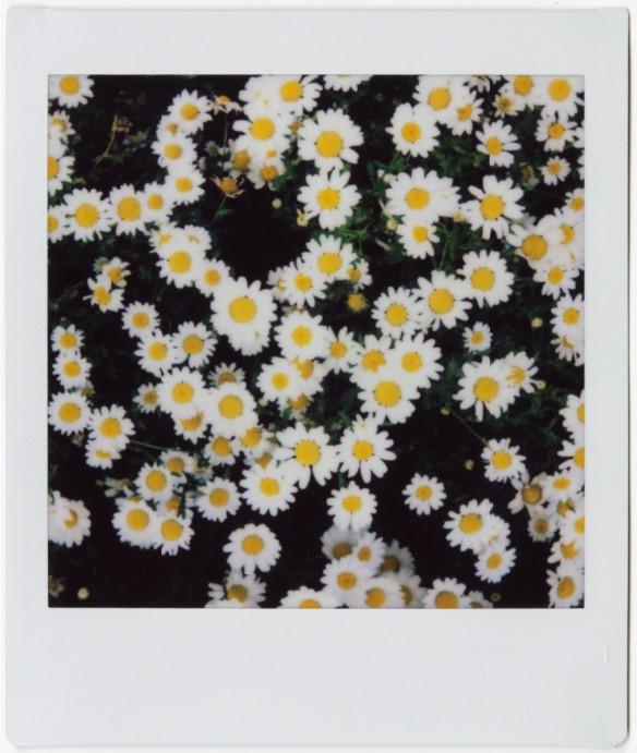 תמונת אינסטקס מרובעת עם פרחים