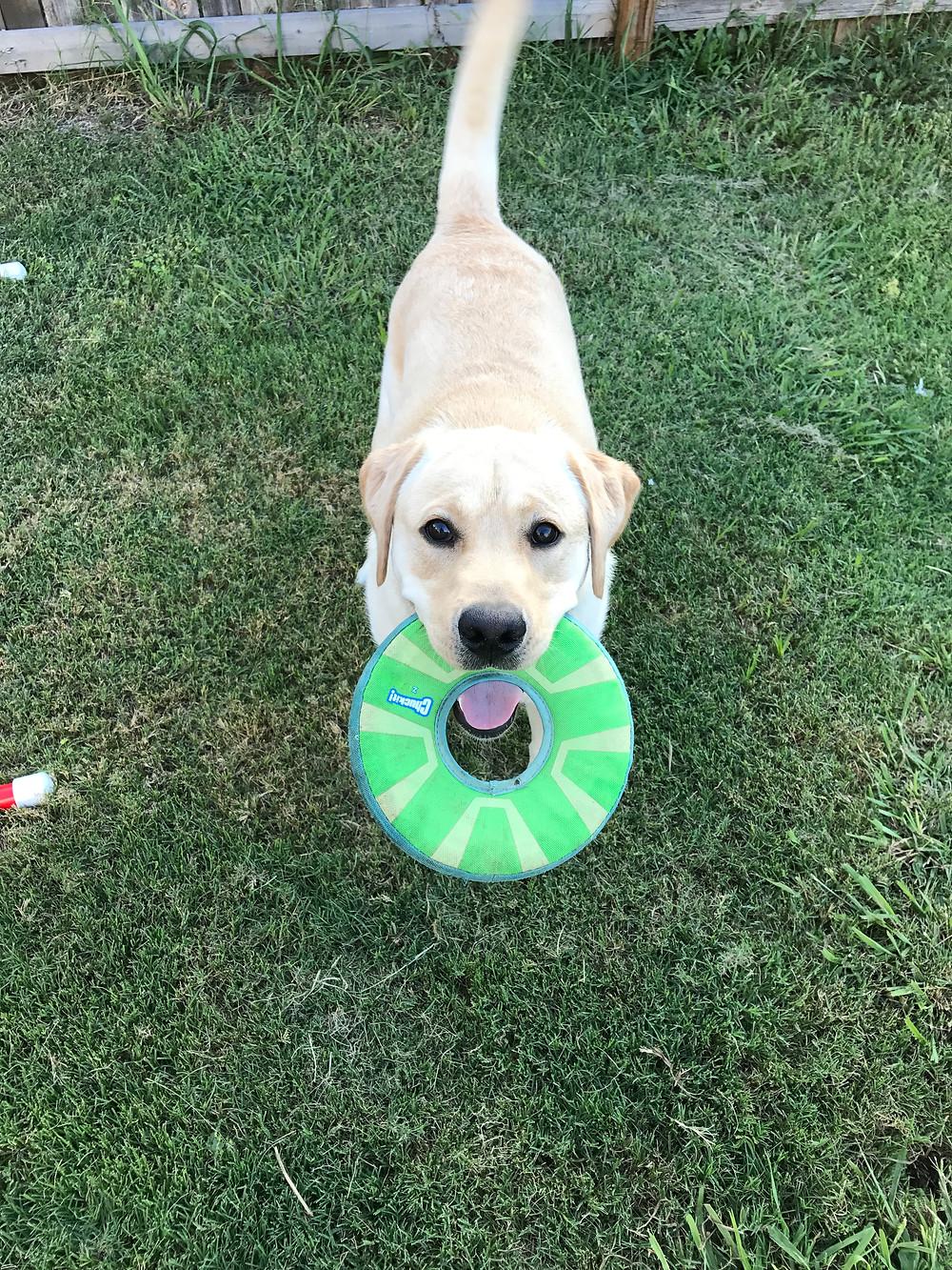 Luke holding the CHUCKIT frisbee
