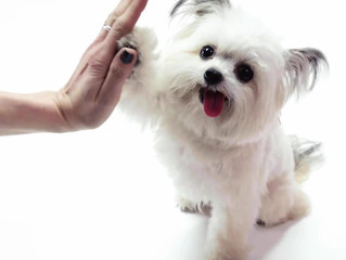 Dog Training: Get your dog to come on command