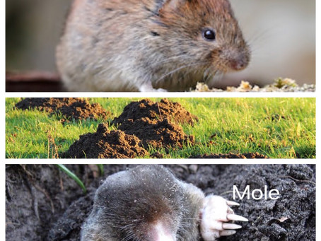 HUMANE deterrence of moles/voles