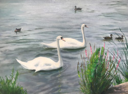 Swans A-Swimming