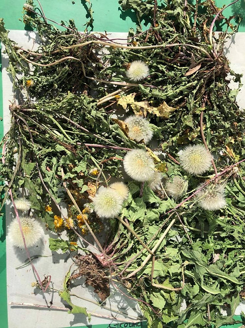 Dehydrated Dandelion Whole plant with root