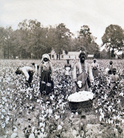 Slaves picking cotton in cotton field / 5 More Sayings I'd Love to Eliminate / www.HoneycombOasis.com