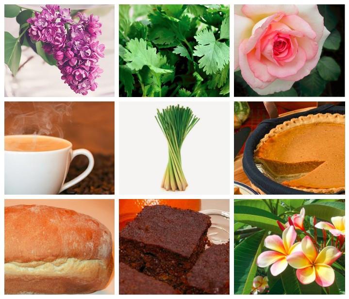 9 pics of my favorite aromas / How to Make Your Own Lemongrass Bath Salts / HoneycombOasis.com
