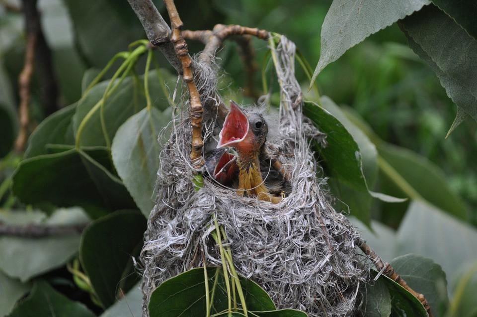 Baby Birdin 5 Sayings I'd Like to Change or Eliminate  ::  www.HoneycombOasis.com