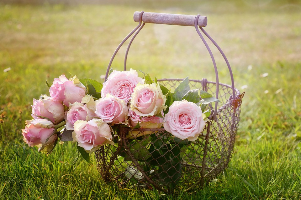Wire basket of pink roses on grass / Mini Quiet Times with a Loved One with Alzheimer's / www.HoneycombOasis.com