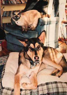 Strider & Arwen at home / Memorial Service for a Beloved Cat / www.HoneycombOasis.com