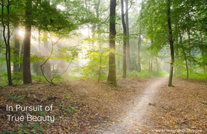 Forest trees with path - In Pursuit of True Beauty - www.HoneycombOasis.com