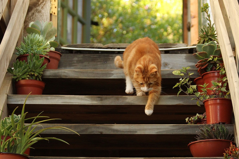 Golden cat walking down porch steps / Setting Up for Success in Weight Loss / www.HoneycombOasis.com