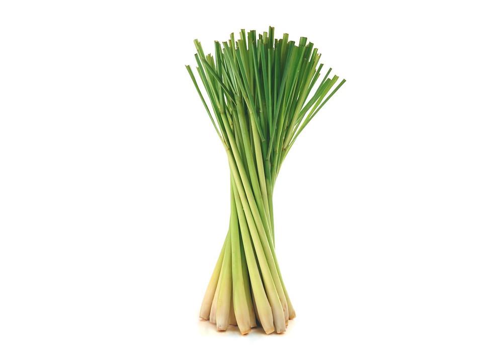 Lemongrass plant / Make Your Own Lemongrass Bath Salts / HoneycombOasis.com