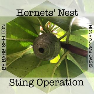 Hornets'Nest Sting Operation
