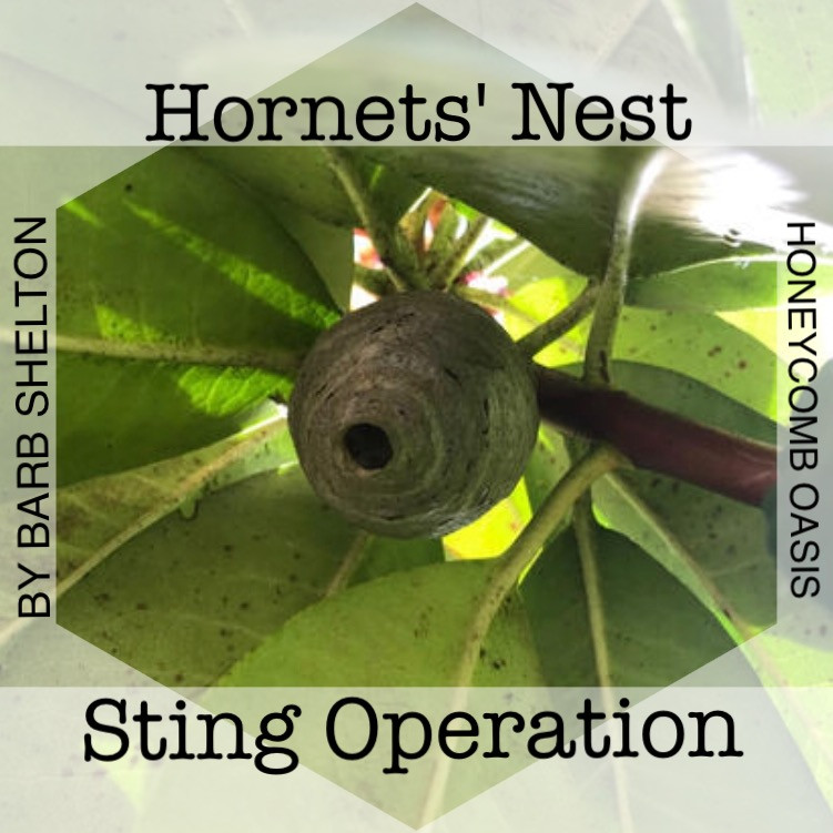 Title graphic for Hornets' Nest Sting Operation / www.HoneycombOasis.com