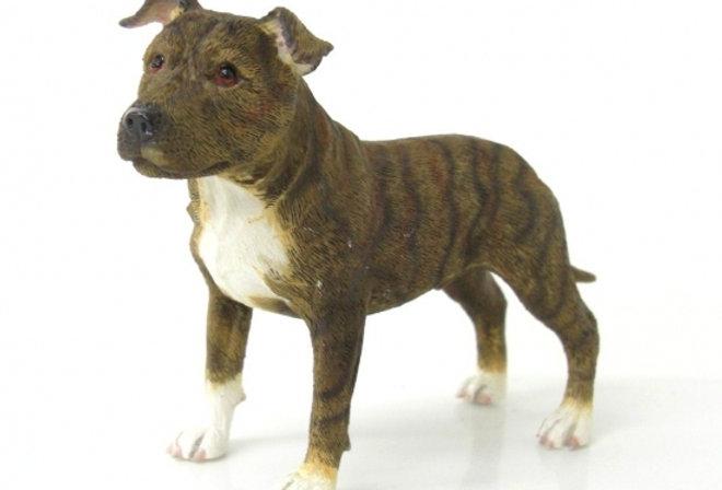 Staffordshire Bull Terrier Dark Brown