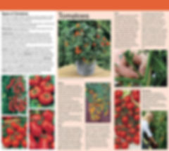 20552+WWJ15+Tomato+Growing+Guide+Flyer+W