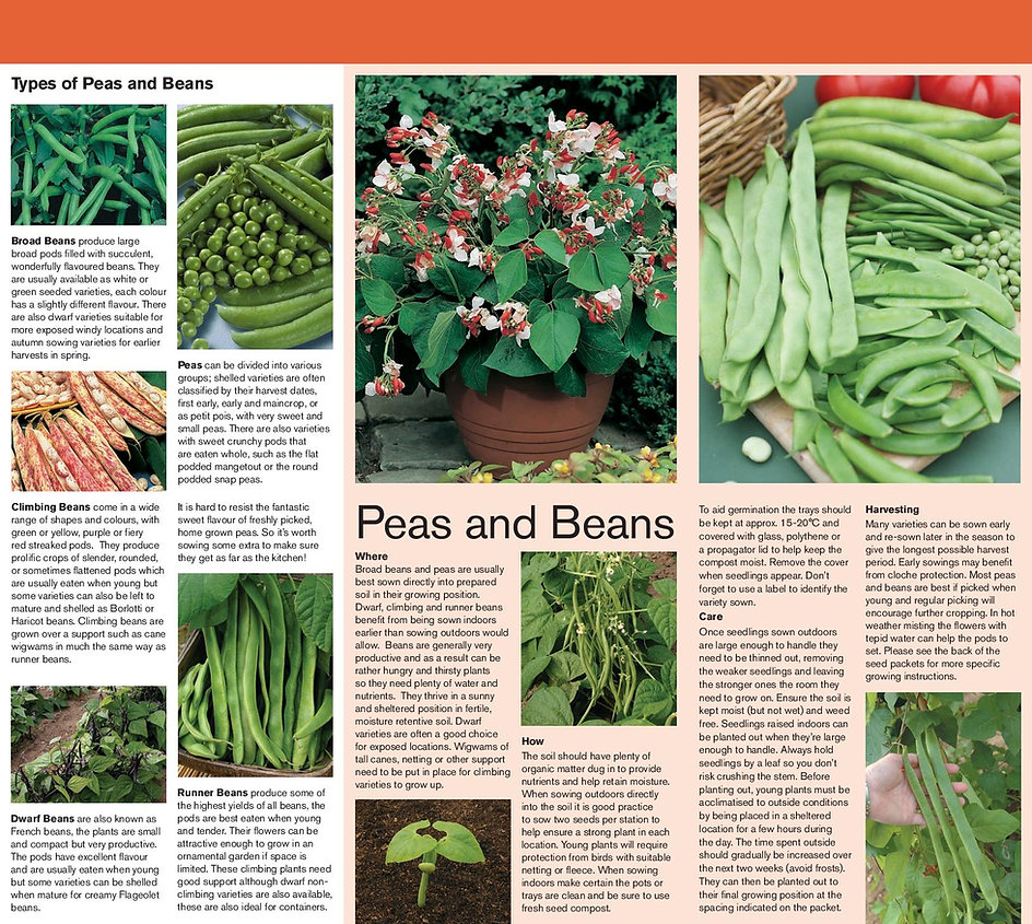 20553+WWJ14+Peas+&+Beans+Growing+Guide+F