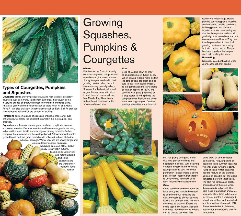 20556+WWJ15+Squashes,+Pumpkins+and+Courg