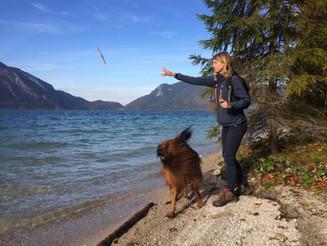 Spiel und Spaß hier mit Stöckchenwerfen für Grisou am Walchensee in Bayern