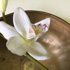 Klangschale mit einer weißen Orchidee darin als Cover für die Klangmeditation Yogi Atmung
