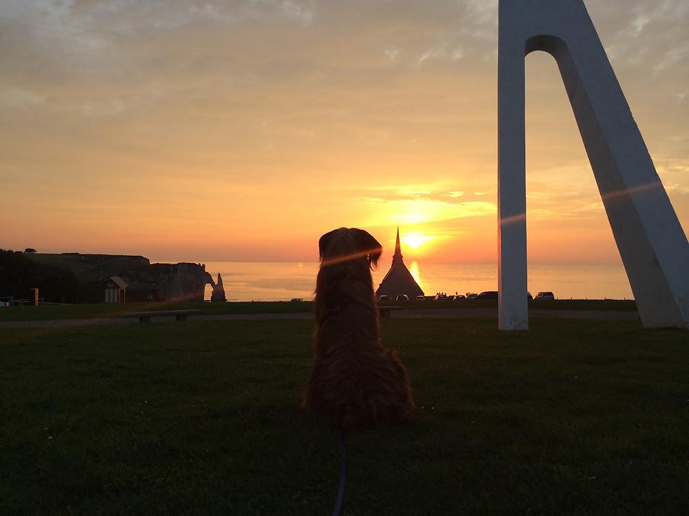 Der Umriss eines Hundes vor einem farbprächtigen, gelb orangenen Sonnenuntergang über dem Meer an der Küste von Étretat, dass berühmt durch sein besonderes Felsentor im Meer geworden ist.