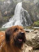 Griosu vom Vossberg am Gollinger Wasserfall