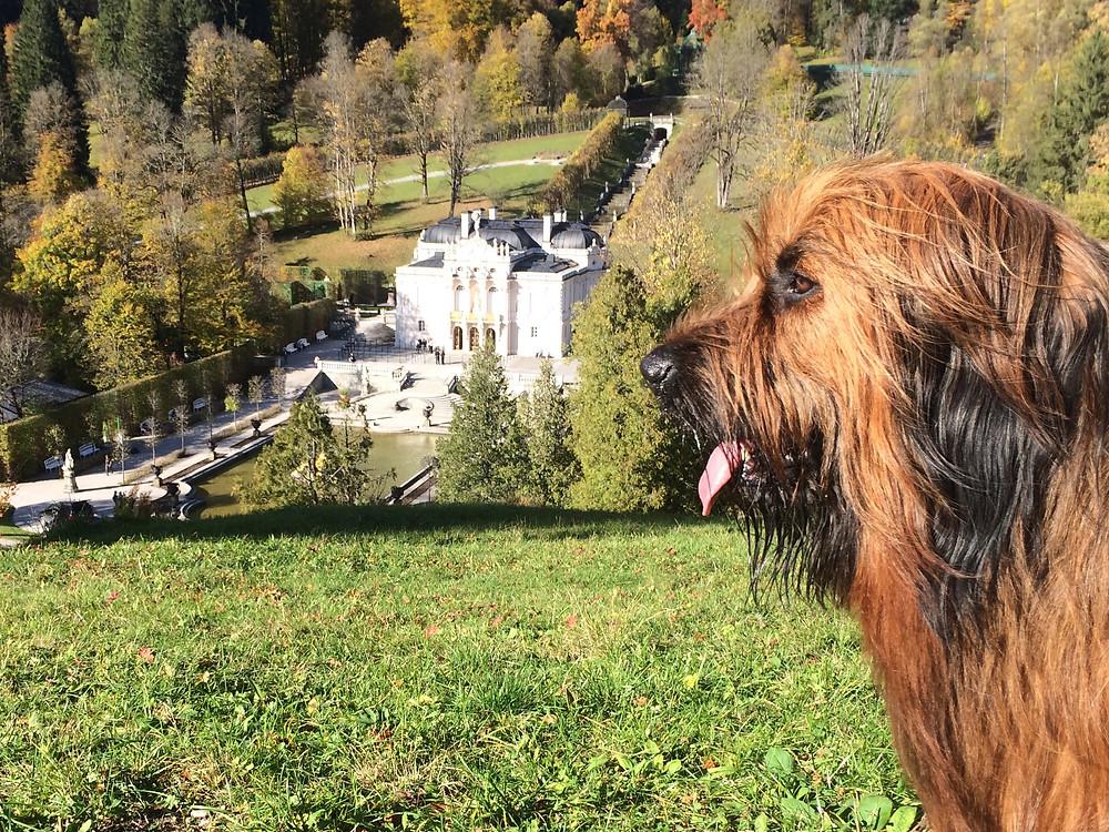 Mein Hund vor Schloss Linderhof als Symbol für das Umsetzen der Herzensträume mit Reality Creation