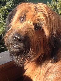 Portrait von meinem Hund Grisou: Er gibt Dir einen kleinen Wegweiser durch meine Klangmeditationen