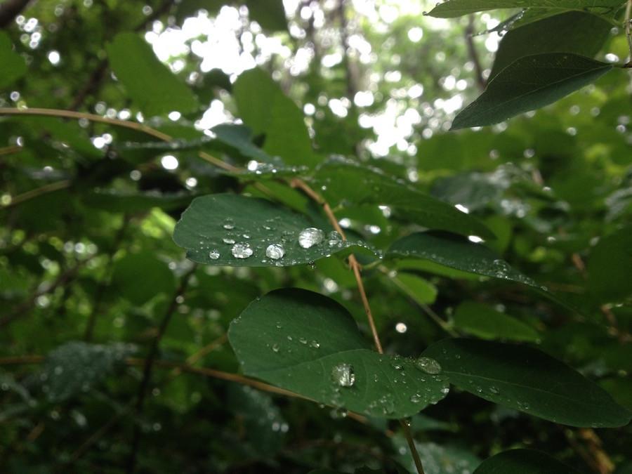 Wunderschöne Wassertropfen auf grünen Blättern