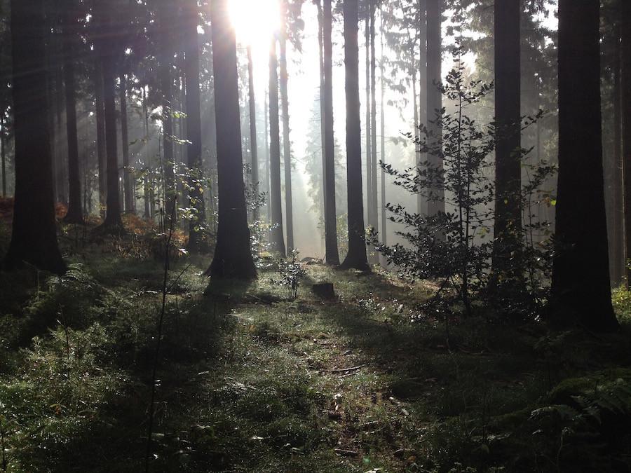 Sonnenaufgang zwischen Bäumen im Wald als Symbol für das Solarplexuschakra und das Wurzelchakra