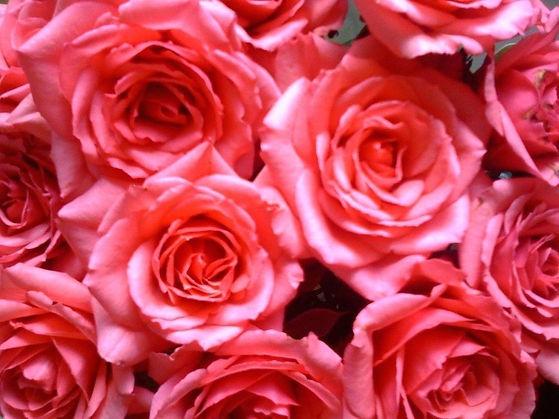 Rosafarbener Strauß aus Rosen als Cover für die Klangmeditation Kleine Meditation für das Herz