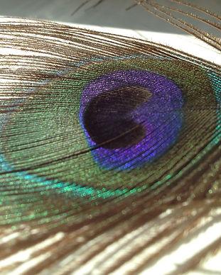 Ein Teil einer Pfauenfeder als Symbol für Selbsterkenntnis und sich in seiner vollen Schönheit zu leben!