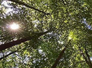 Grüne Baumkronen, durch die die Sonne scheint. Cover für die Sound Healing Meditation Das Rauschen des Waldes