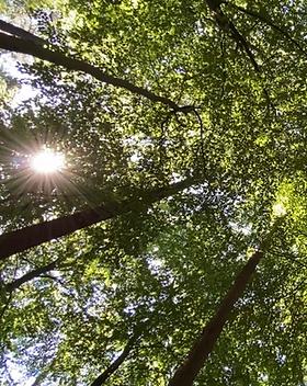 Von der Sonne beschienene Baumkronen als Cover für die Sound Healing Das Rauschen des Waldes
