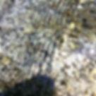 Kleine Wellen auf dem Wasser über einem grauweißen Stein
