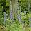 Thumbnail: Lobelia siphilitica - Great Blue Lobelia