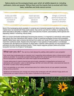 Native plants 2.jpg