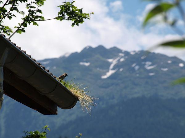 Chambre d'hôtes B&B l'Abeille Saint-Michel, Albertville (Marthod), Savoie. Un nid douillet
