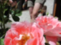 abeille noire en vol au dessus d'une rose