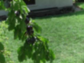Chambre d'hôtes l'Abeille Saint-Michel, Marthod (Savoie) : le jardin