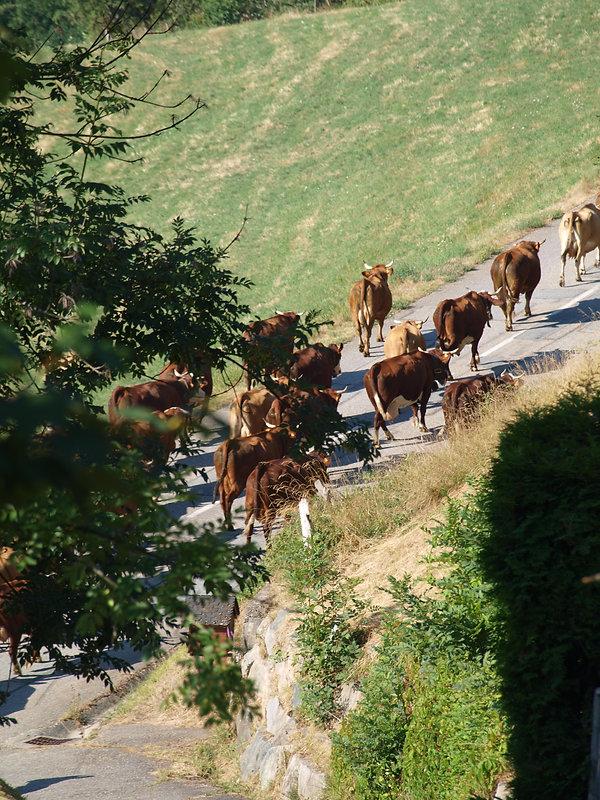 Chambre d'hôtes Abeille Saint-Michel, albertville (Marthod), Savoie : montée en Alpage