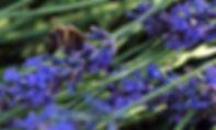 Chambre d'hôtes l'Abeille Saint-Michel à Albertville (Marthod), Savoie : zoom sur le jardin
