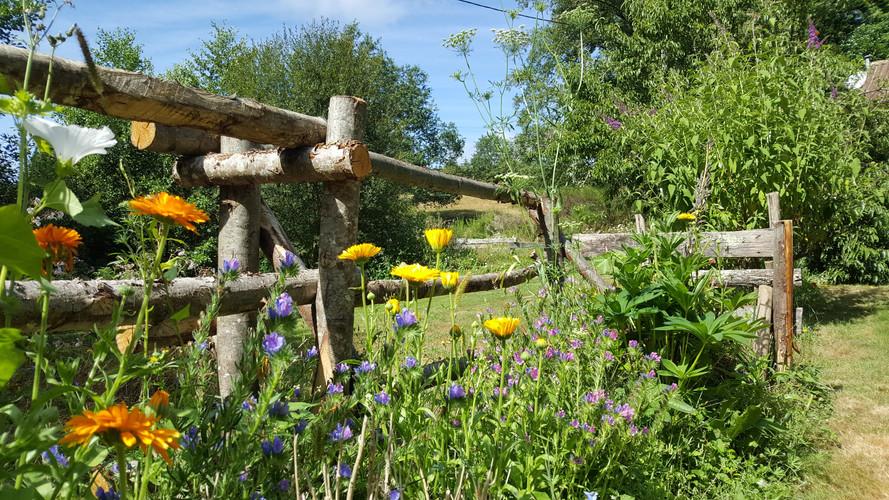 HA garden.jpg