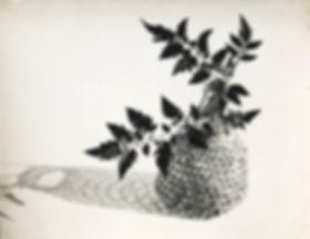 Gertrudes Altschul_ Delicado_1956_vintag