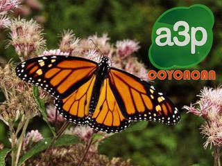 Mariposa Monarca en peligro de extinción