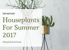 The Hottest Houseplants For Summer 2017 Are???