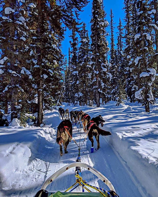 Photograph of Husky dog sledding in rocky mountains in the winter time. Peaceful quiet happiness like travel through magical narnia.
