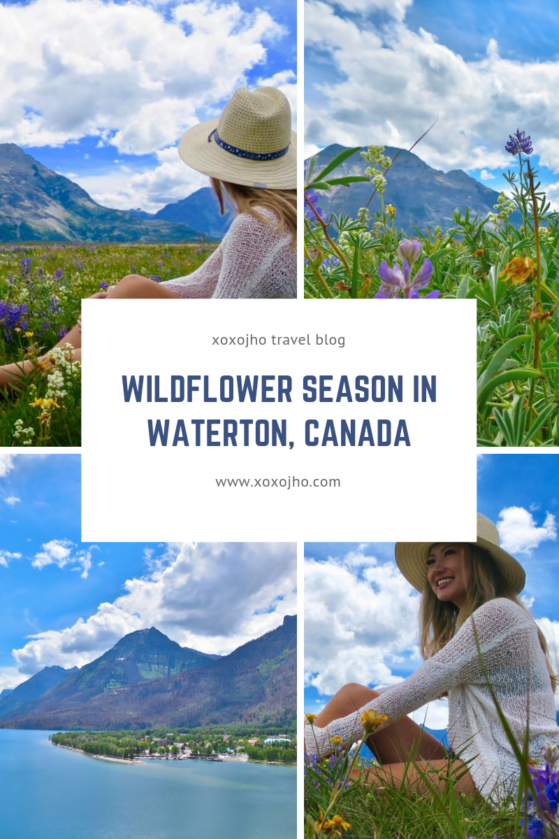 Beautiful landscape photograph of Waterton Lakes National Park in Alberta Canada. GIrl travel blogger explore and love the gorgeous rocky mountains during wildflower festival season.