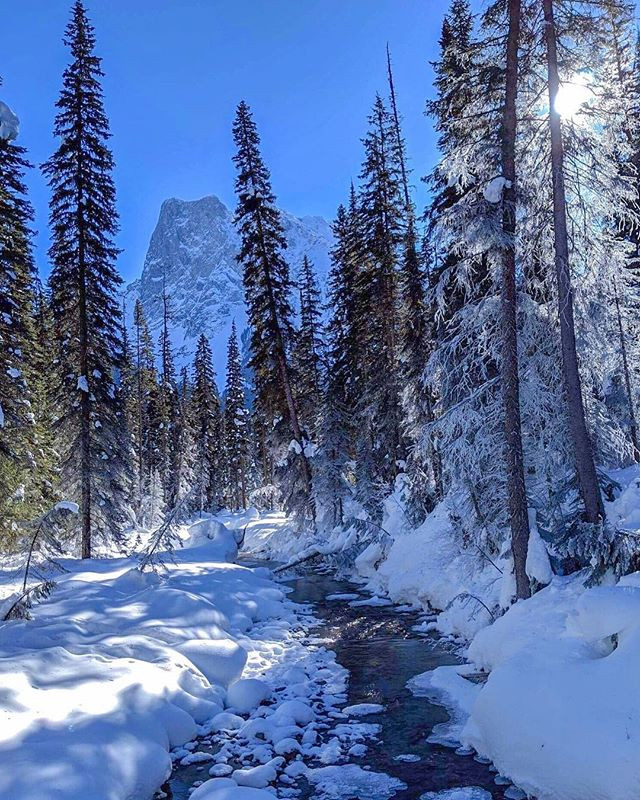 Peaceful winter scenery with rockies and snow. Beautiful photograph of quiet and peaceful rocky mountains in the winter time. Douglas fir trees and frozen lake with a wooden cabin at Emerald Lake, Lake Louise Yoho National Park in Banff Canada.