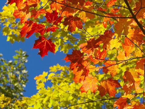 Herbstferien - vom 19. bis 31. Oktober